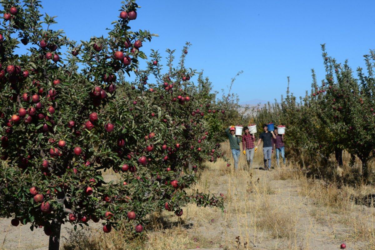 Bitlis te destekle oluşan bahçelerden 20 milyon lira gelir bekleniyor #1
